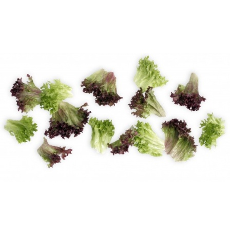 BABY MIX LOLLO LETTUCE