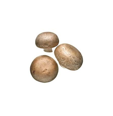 BROWN BUTTONS MUSHROOM (CHESS NUTS)