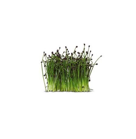 CHIVES SPROUTS