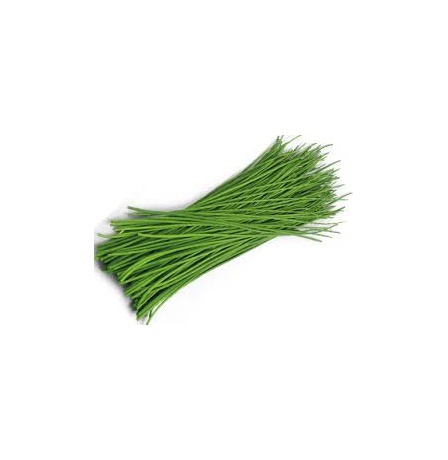 CHIVES (NETHERLAND)