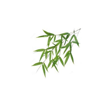 BAMBOO LEAVES