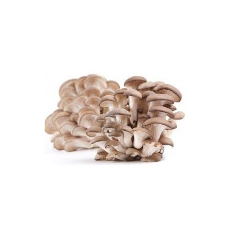 oyster-mushrooms
