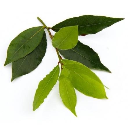 pay-leaf