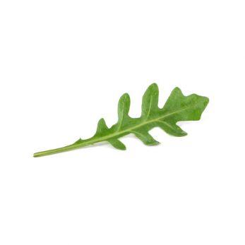 rocket_leaf