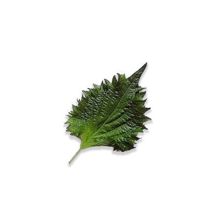 shiso-leaves