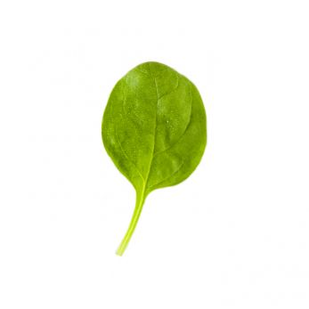 spinach_leaf
