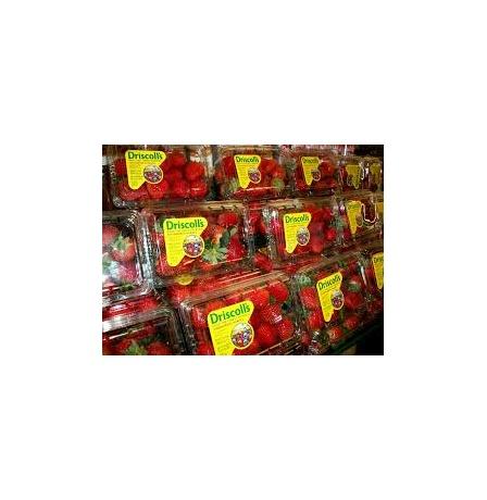 strawberry-driscoll