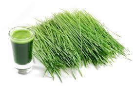 wheat_grass