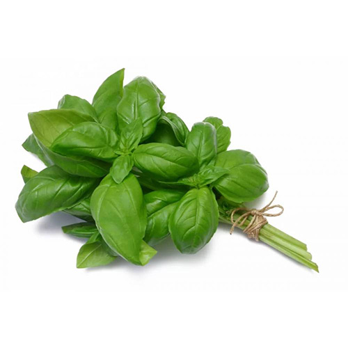 Basil Holland 100 Gram – Pkt