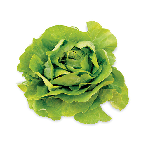 Boston Lettuce – Kg