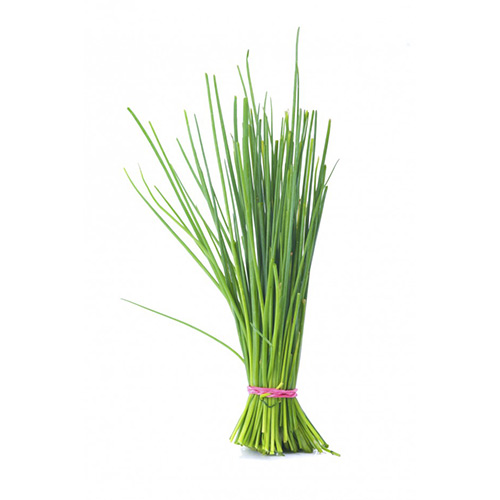 Chives Holland 100 Grams – Pkt