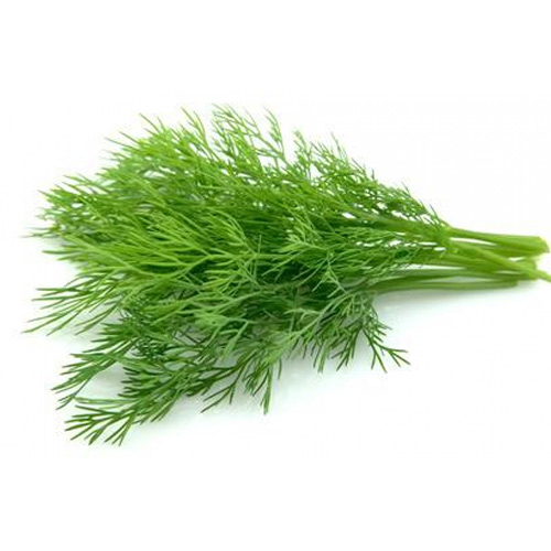 Dill Leaves – Bunch