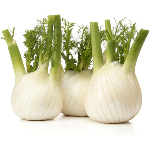 Fennel Holland – Kg