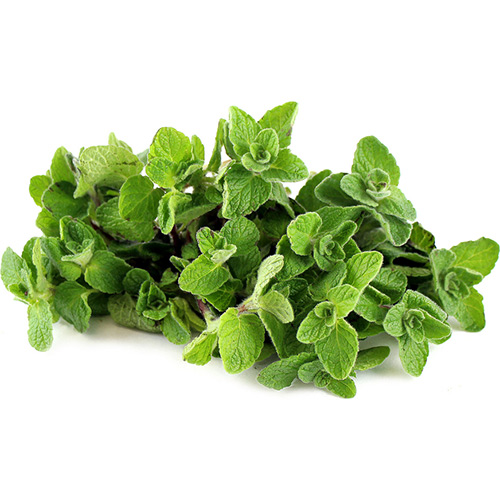 Herbs Oregano Holland