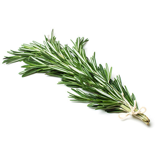 Herbs Rosemary Holland