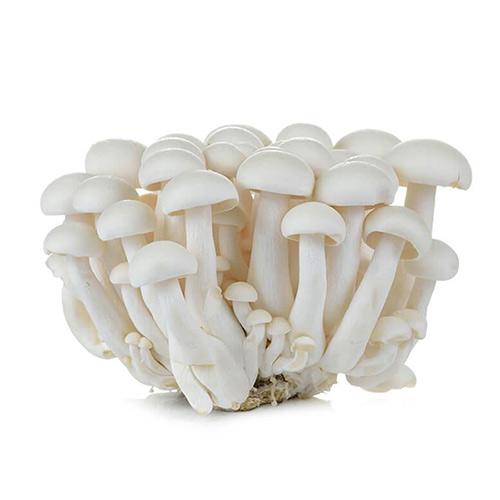 Shimeji Mushrooms White – Pkt