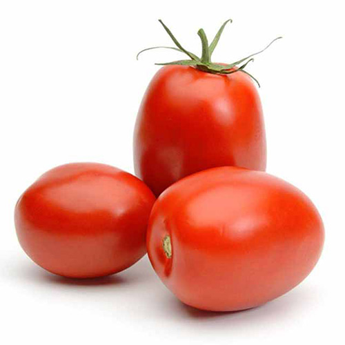 Tomatoes Plum Holland – Kg