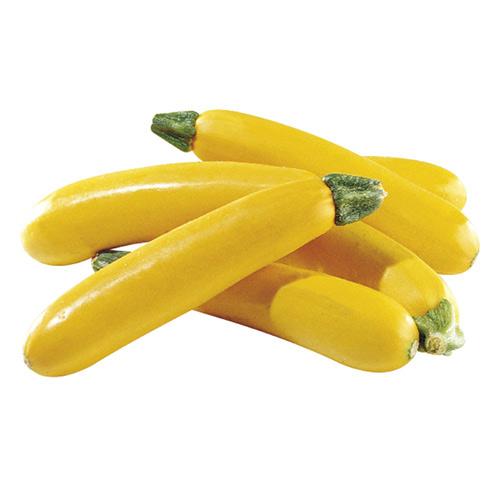Zucchini Yellow Holland – Kg
