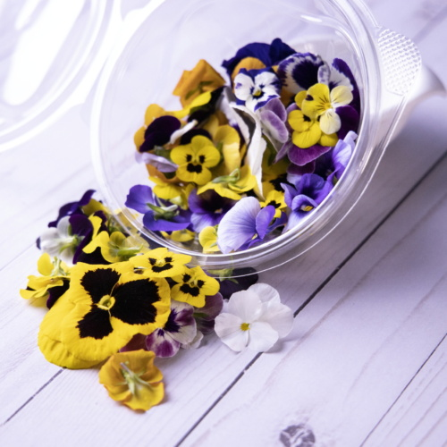 Edible Flower Viola- Punnet