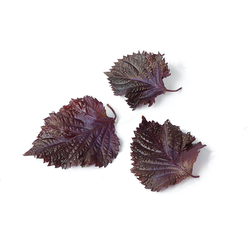 Red Shiso Leaves